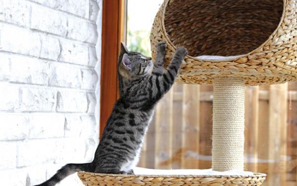 Un arbre chat pour viter les marques sur les meubles - Arbre a chat simple ...