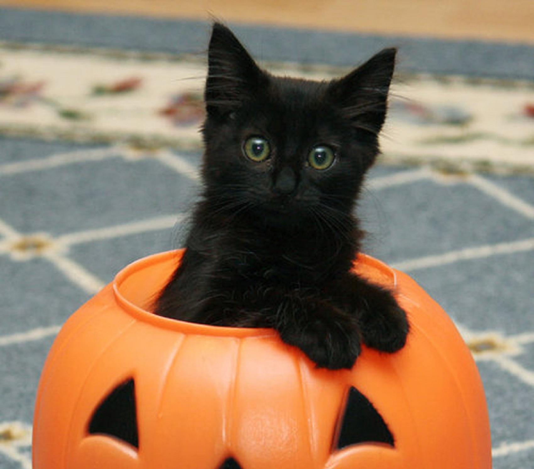 Top Le chat noir est-il plus abandonné? MN91